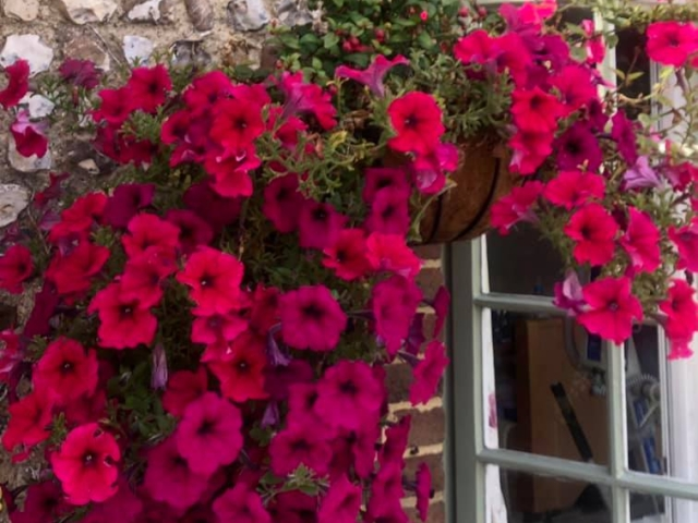Pink window boxes | Country Lodge Nursing Home West Sussex