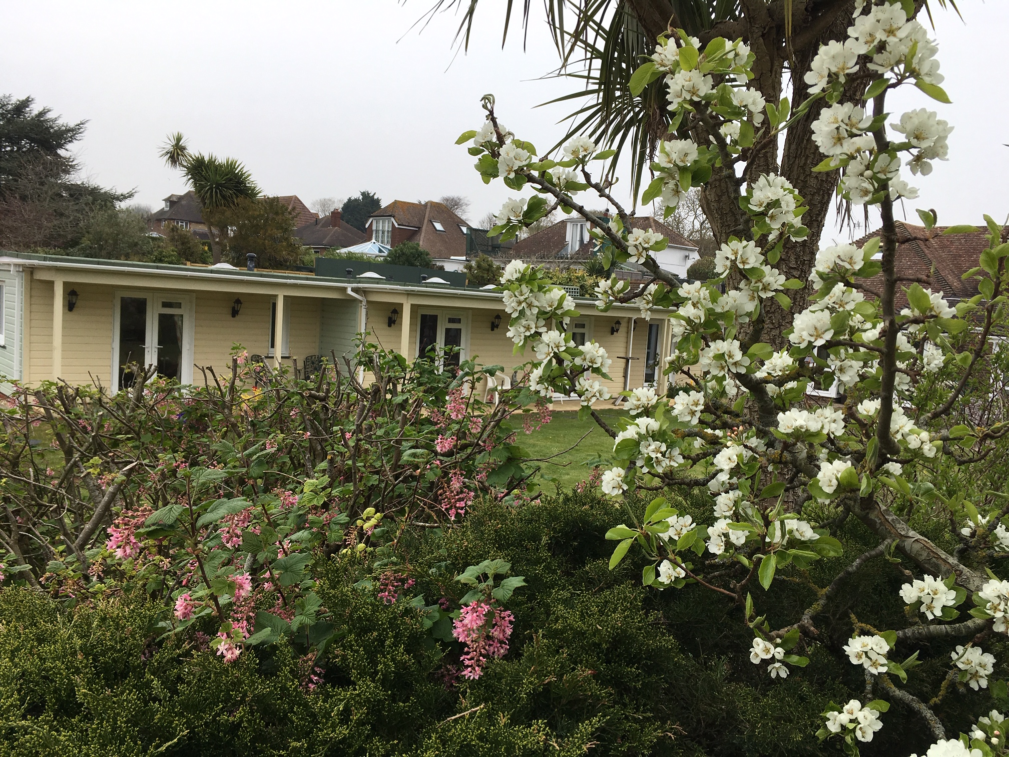 Spring view | Elderly Care Worthing